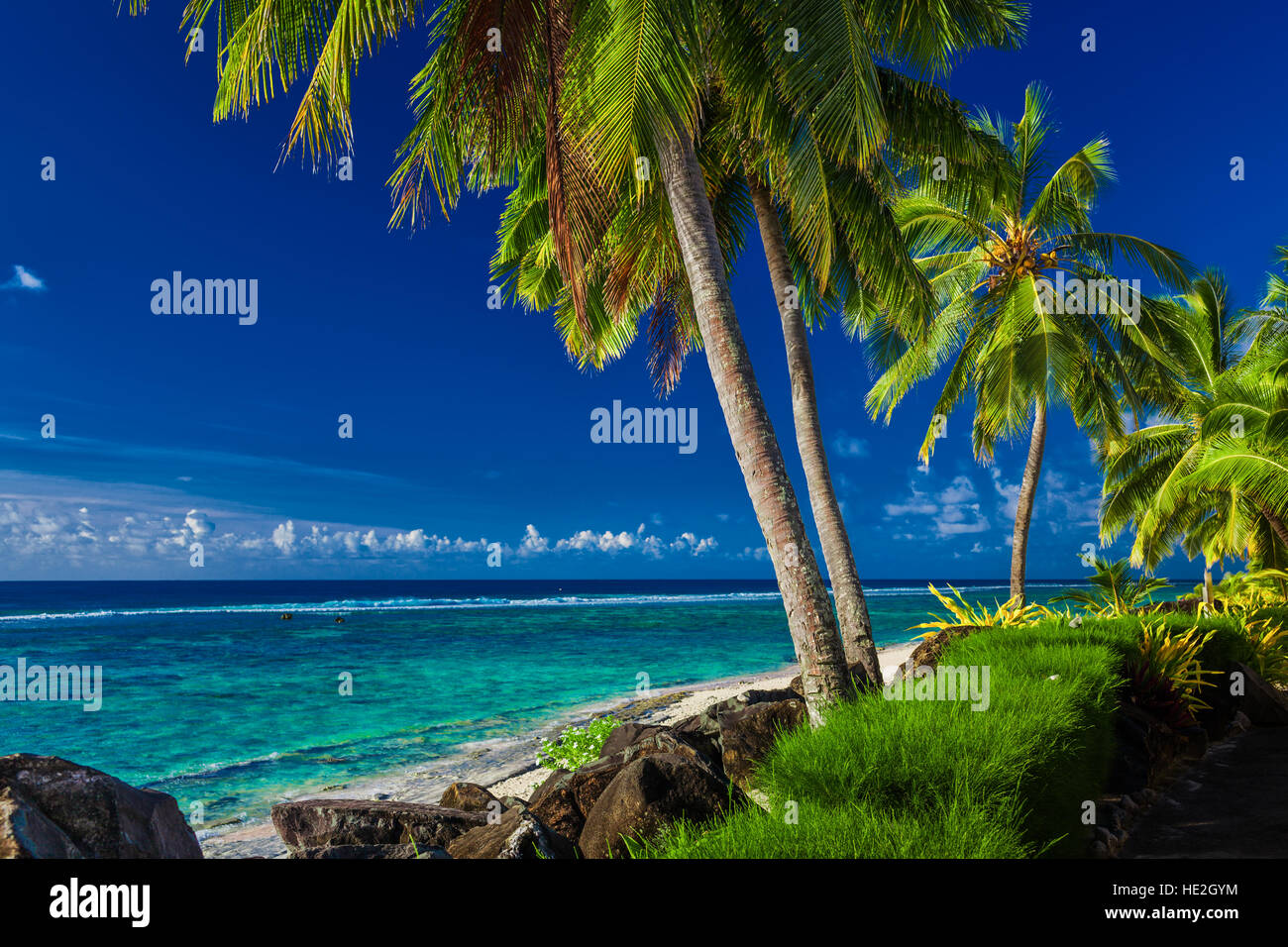 Coconut palm trees over the tropical beach of Rarotonga, Cook Islands, South Pacific - Stock Image