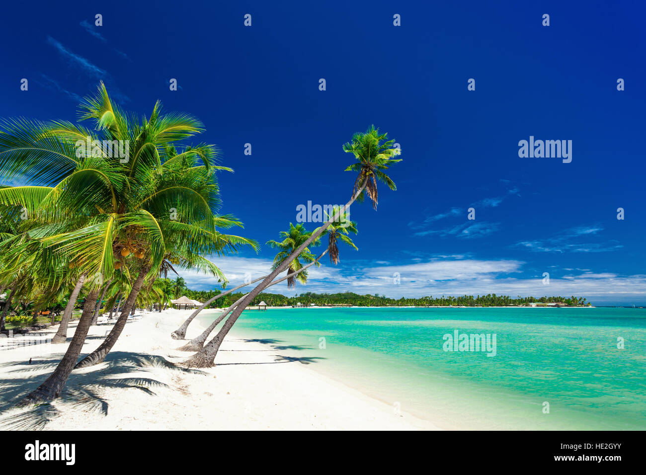 Palm trees over white beach on a a Plantation Island, Fiji, South Pacific - Stock Image