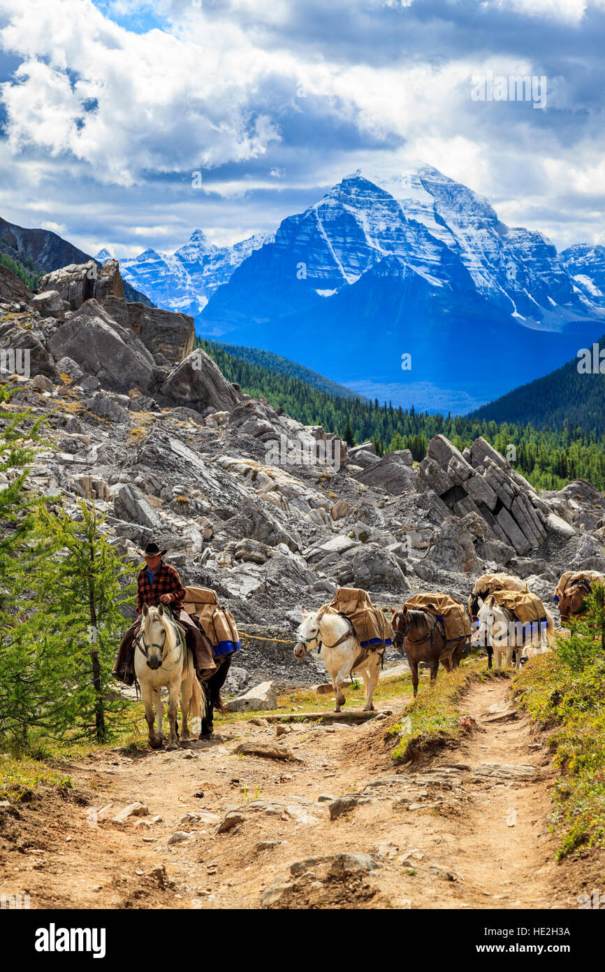 pack horses carry supplies on a steep trail to baker creek mountain
