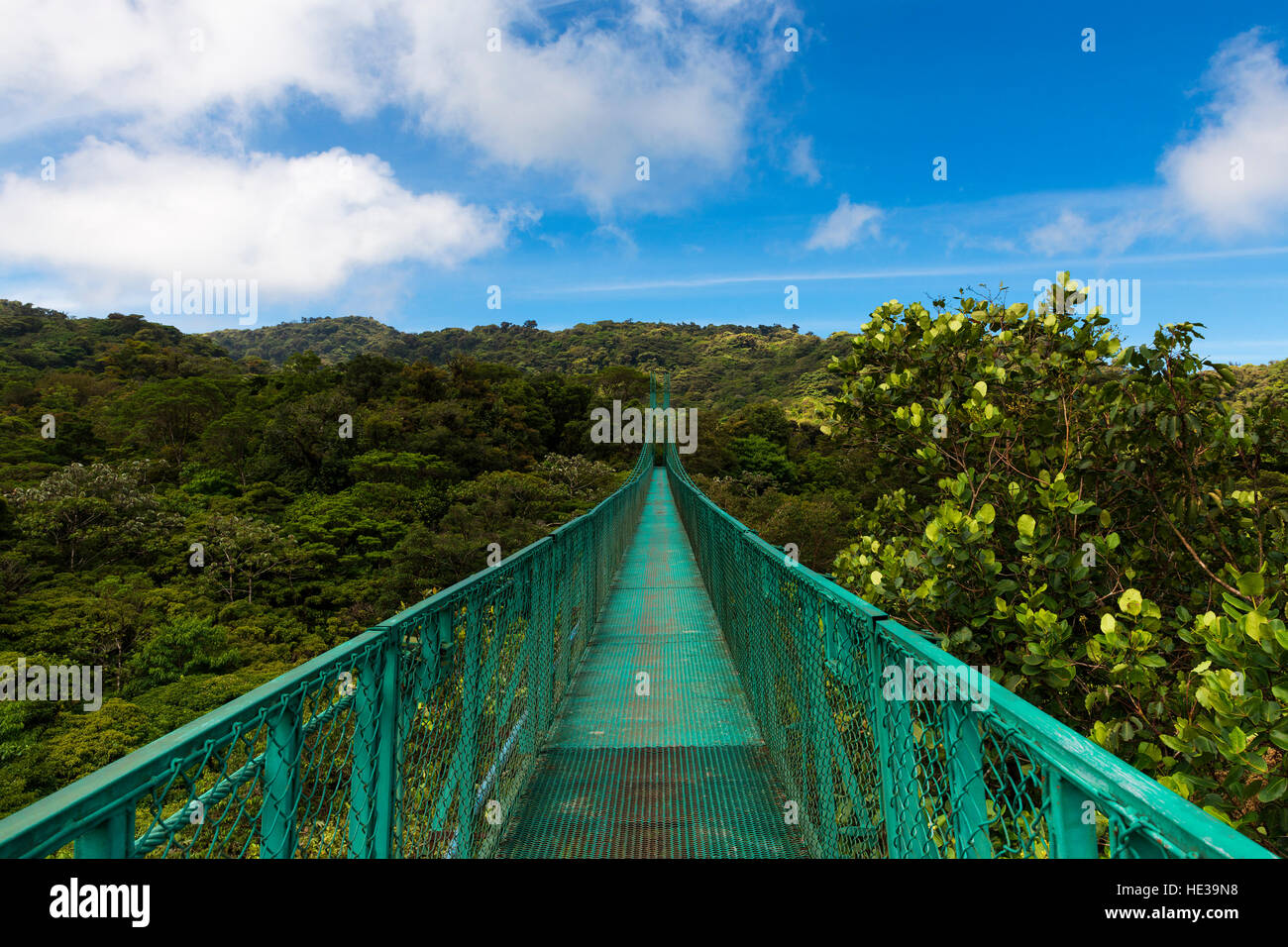 Suspended bridge over the canopy of the trees in Monteverde, Costa Rica, Central America - Stock Image