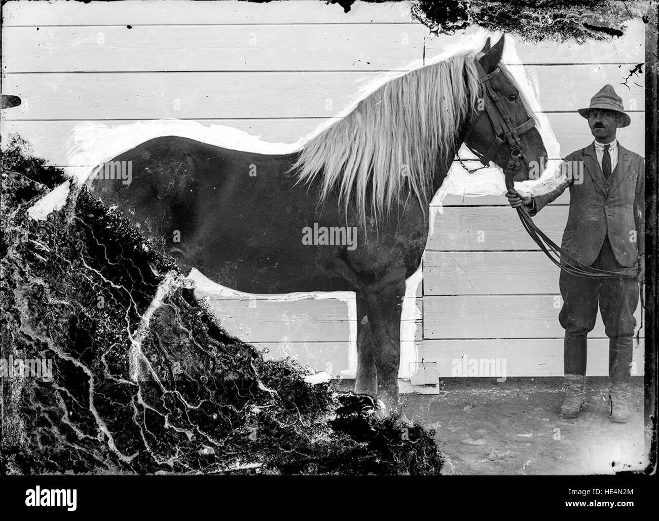 Bărbat cu cal - Stock Image