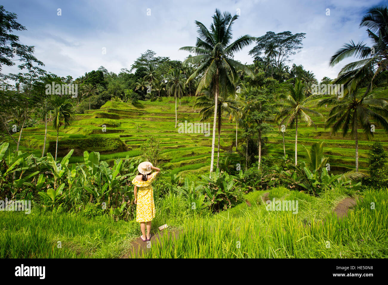 young girl in Tegallalang rice terraces, Bali - Stock Image