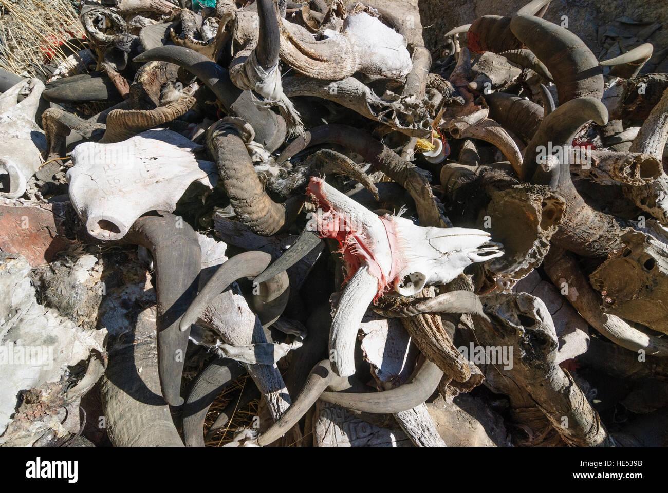 Lhasa: Monastery Sera; Kora (pilgrimage route) around the monastery; Pile of sheep and yak skulls as sacrifices, - Stock Image