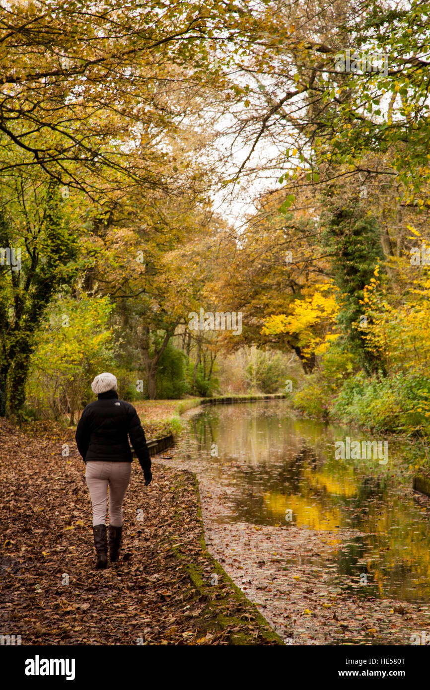 Woman walking along the canal tow path in the Autumn at Froghall wharf Staffordshire England - Stock Image