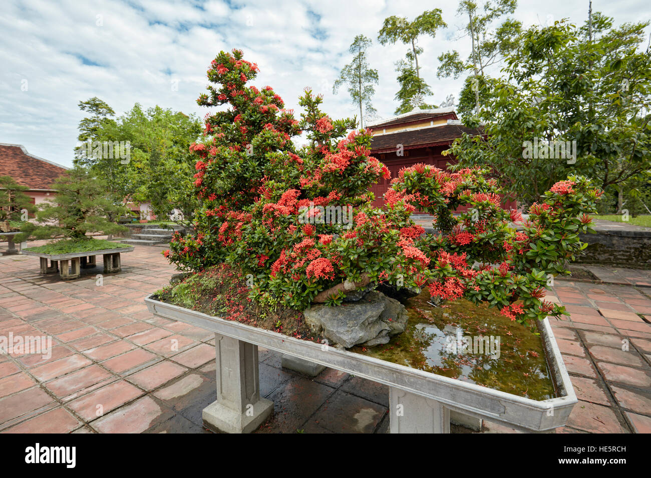 Vietnam Bonsai Tree Stock Photos & Vietnam Bonsai Tree Stock Images ...