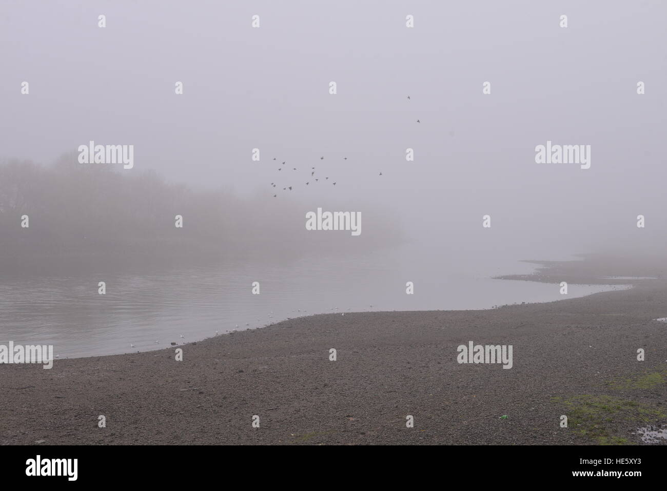 Foggy misty day ducks flying over river Thames, Barnes ©Francisco A. Soeiro/News Alamy - Stock Image
