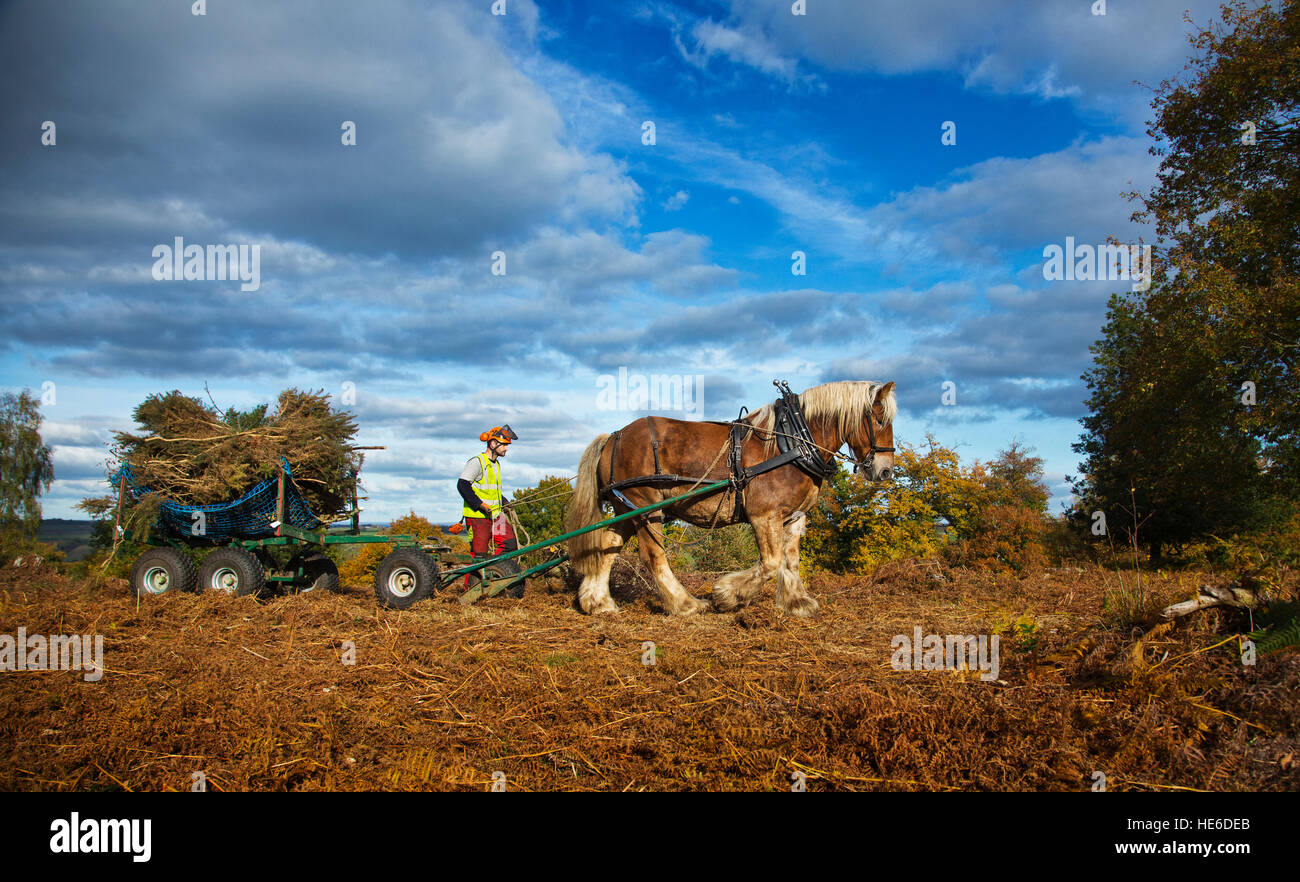 A Horse doing forestry work - Stock Image