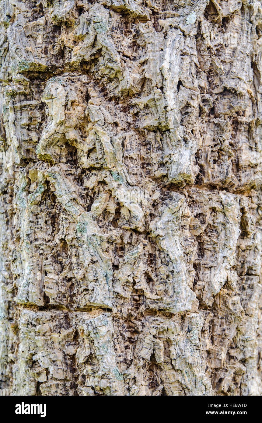 Tree bark surface texture background - Stock Image