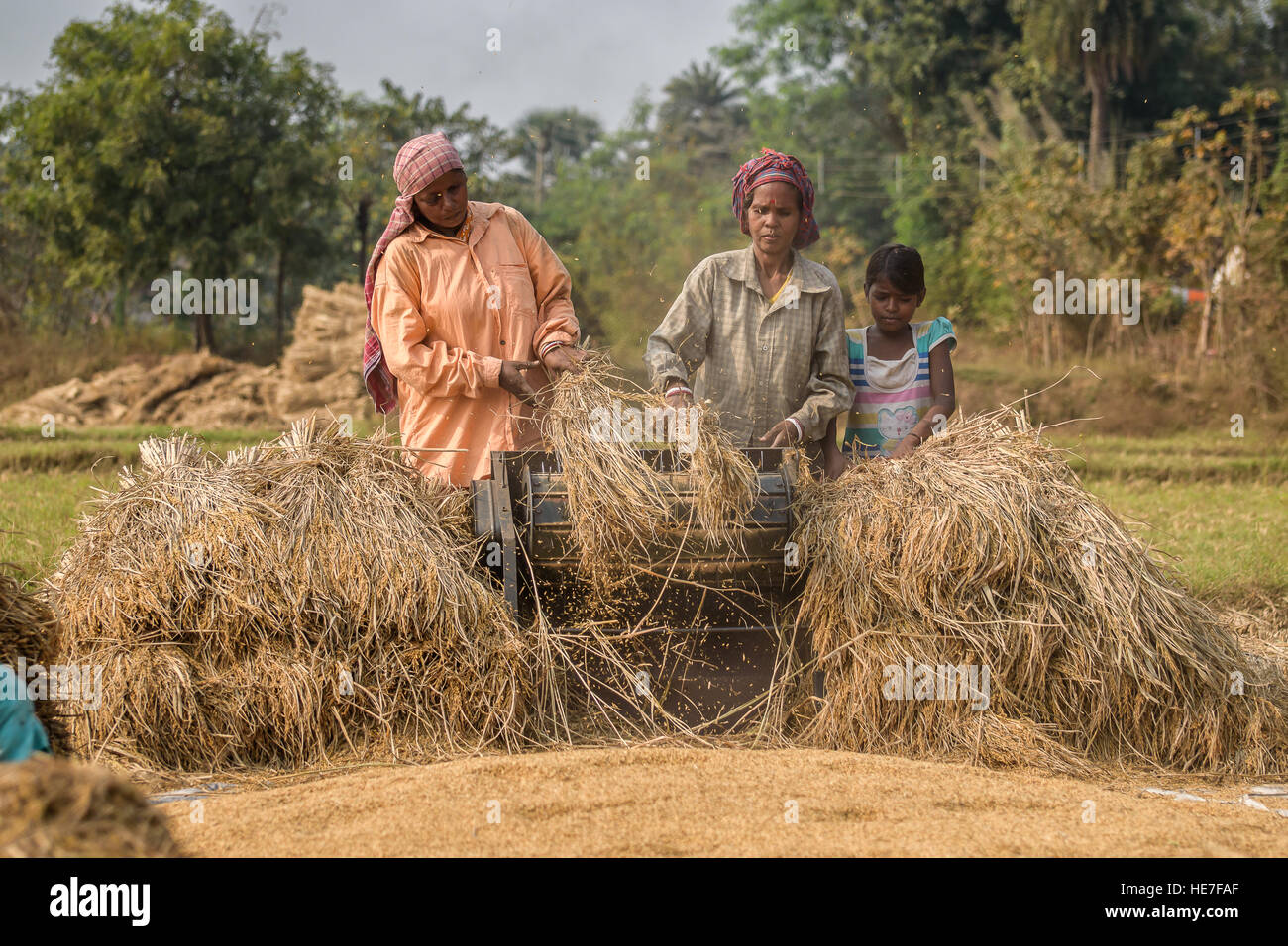 The villagers r hauling their harvested crops in the machine. - Stock Image