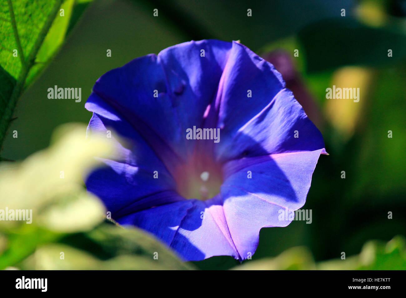 Sunbath - Stock Image