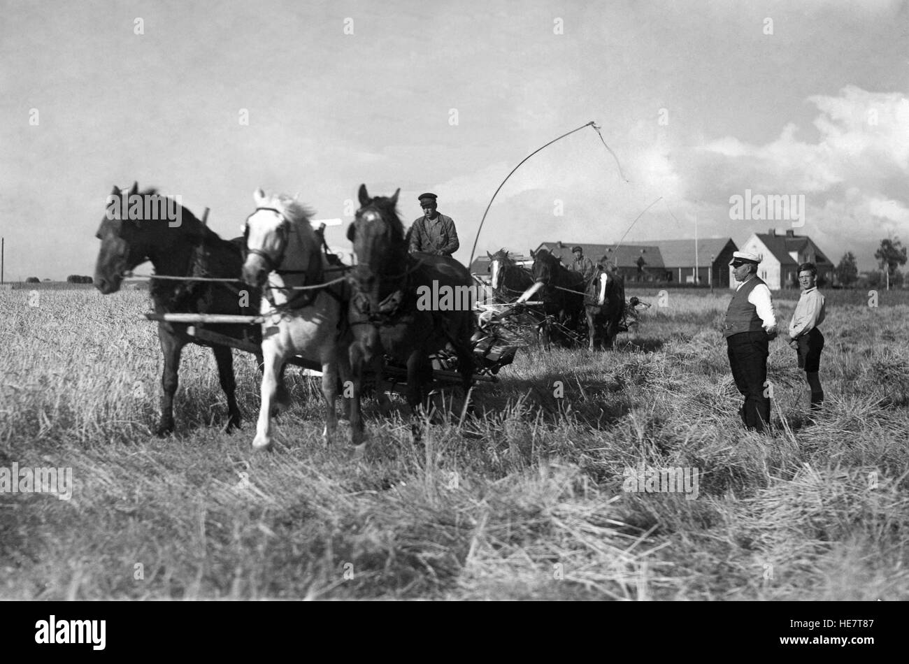 AGRICULTURE Estate owner is out and control the harvest 1933 - Stock Image