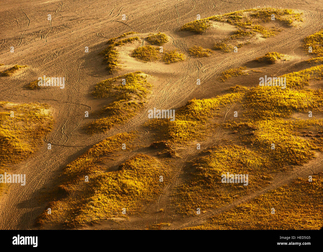 Motorcycle wheel trace in the desert and meadow under sunset light - Stock Image