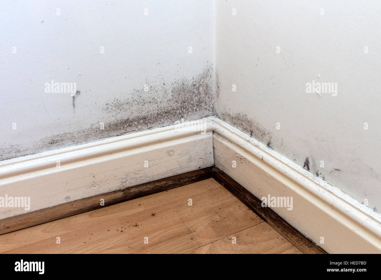 Black Mould Growing On The Walls Skirting Boards And