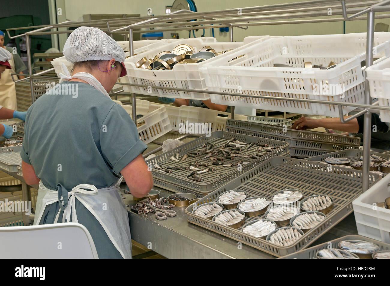 Fish canning industry, Cambados, Pontevedra province, Region of Galicia, Spain, Europe - Stock Image