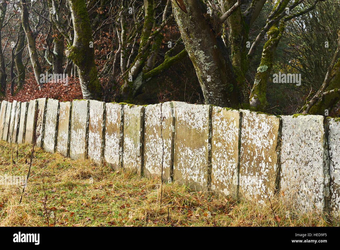 Flagstone wall.  Near Thurso, Caithness, Scotland. - Stock Image