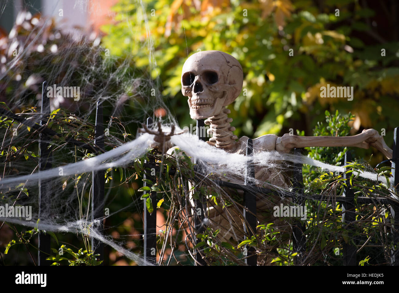 Funny Skeletons Stock Photos & Funny Skeletons Stock Images