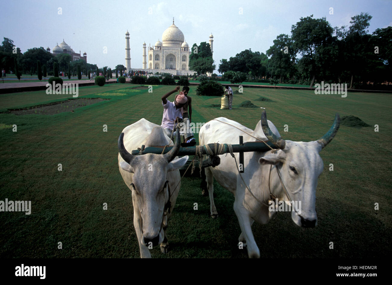 Pollution-free lawn mowing in the World wonder Taj Mahal 'the Taj',  a white marble mausoleum. - Stock Image