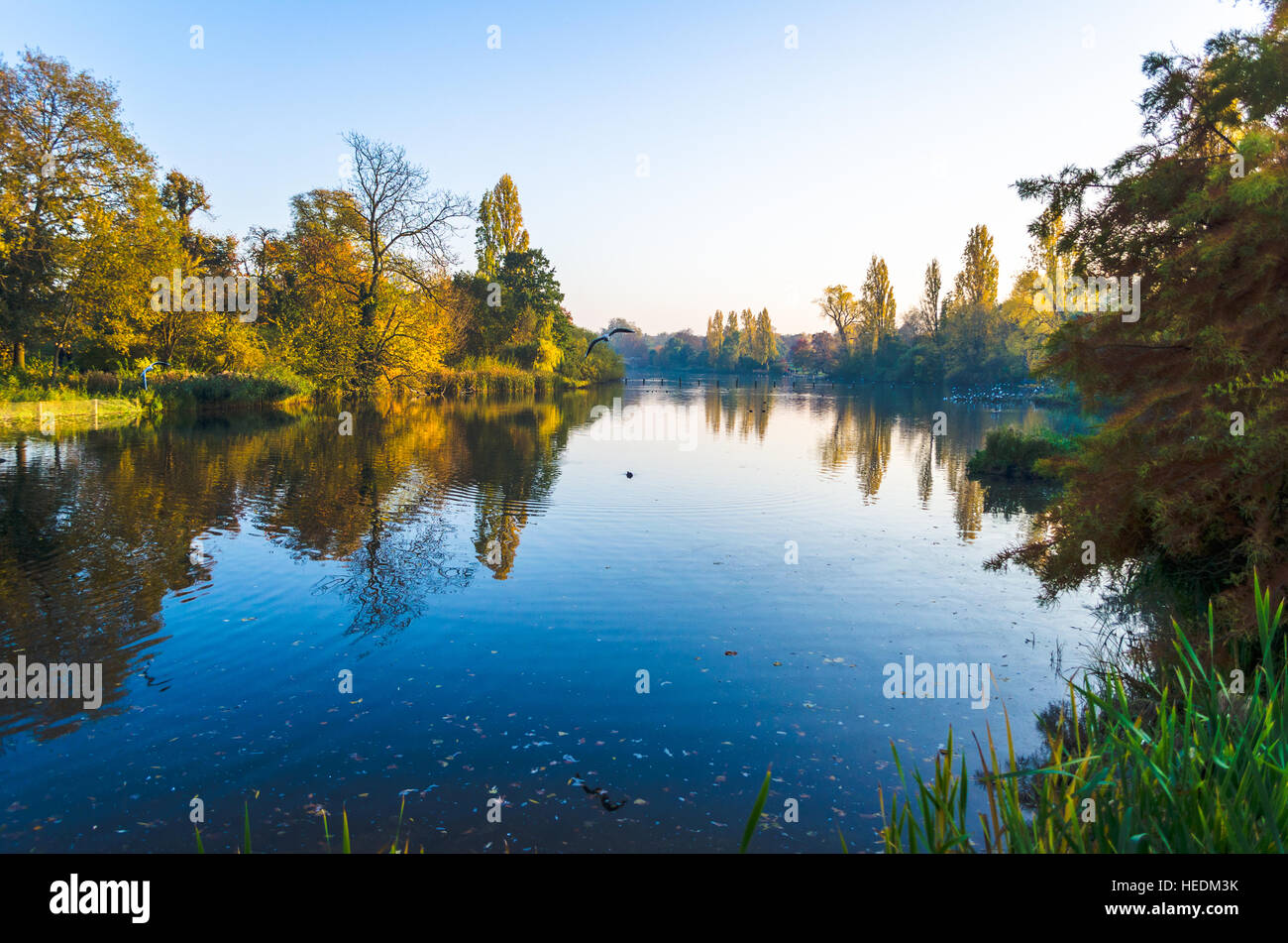 Vibrant autumn colours around a duck pond at Hyde Park, London - Stock Image
