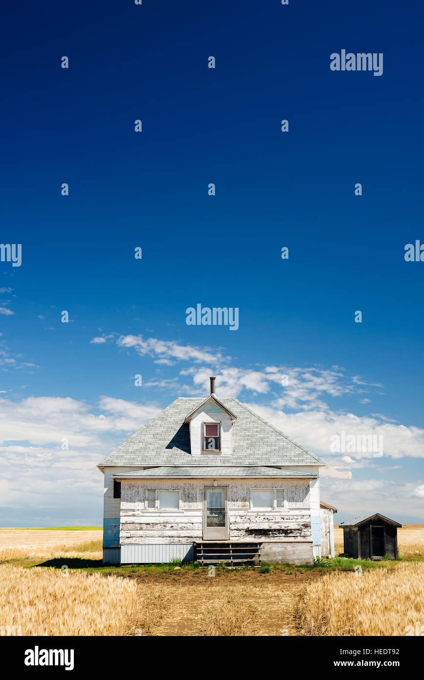 An abandoned farm house, surrounded by fields of wheat in rural Saskatchewan - Stock Image