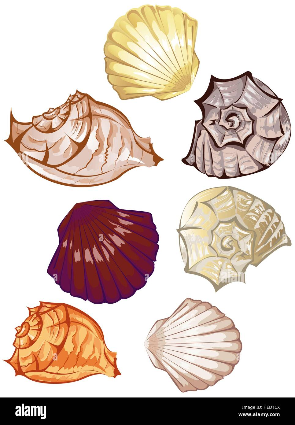 stylized colorful seashells on a white background - Stock Vector