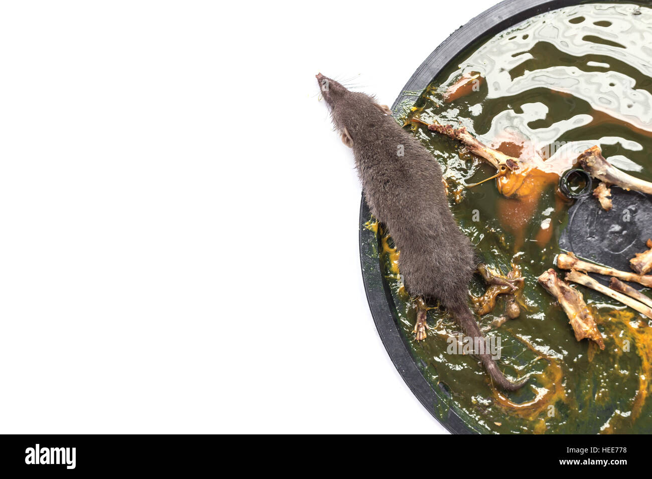 Dead Mouse Glue Trap Stock Photos Amp Dead Mouse Glue Trap