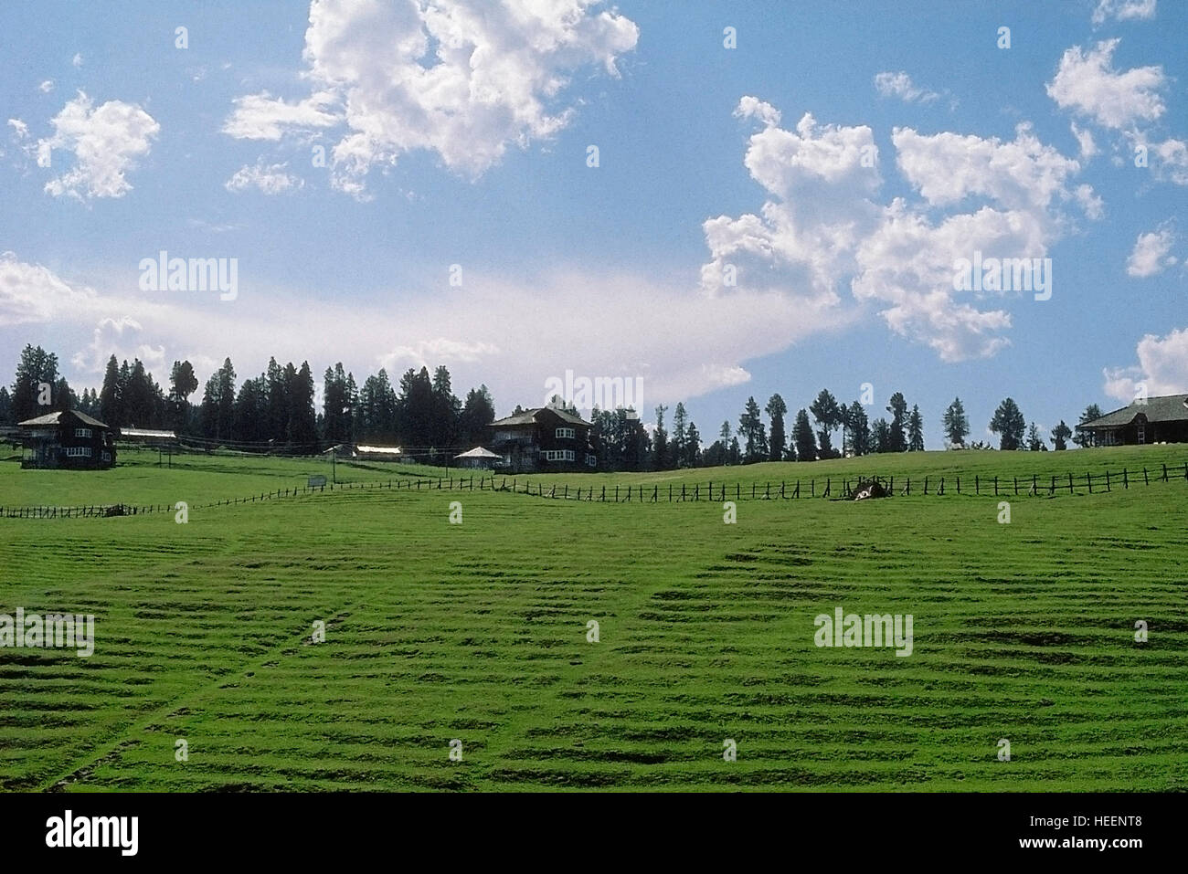 A small grassy meadow, Khajjiar, Himachal Pradesh, India - Stock Image