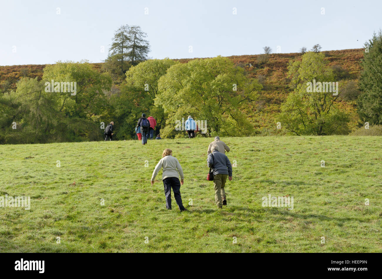 Digedi Valley Walking Group Climbing towards Cilgueffordd abandoned farm - Stock Image