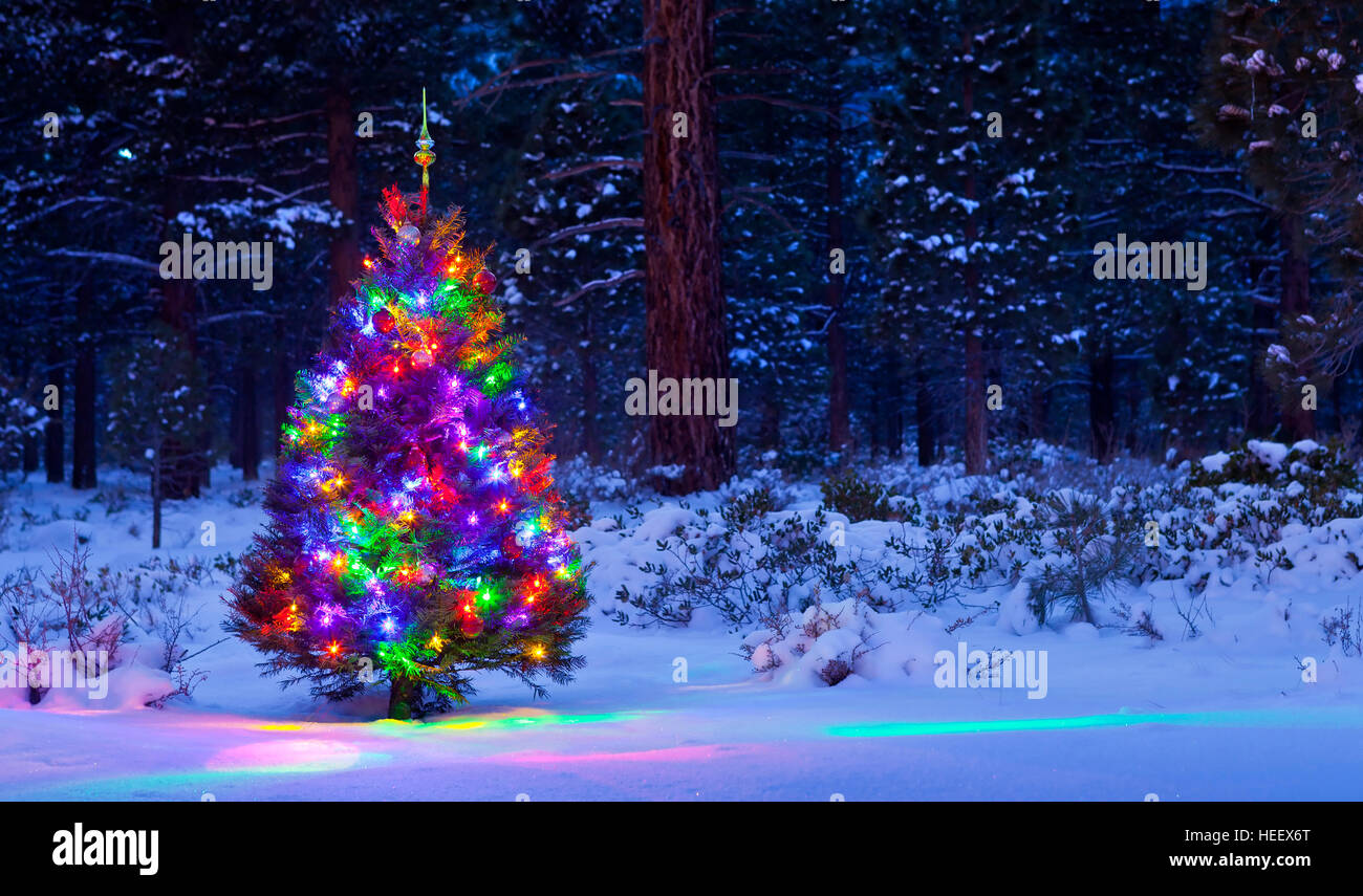 Christmas In The Woods.Christmas Tree In The Woods At Night With Snow Stock Photo
