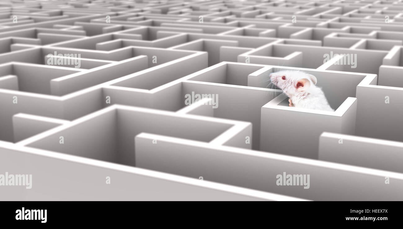 White Mouse in White maze looking over walls - Stock Image