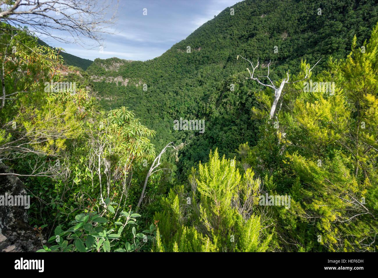 Viewpoint, Laurel forest, Los Tilos Biosphere Reserve, La Palma, Canary Islands, Spain - Stock Image