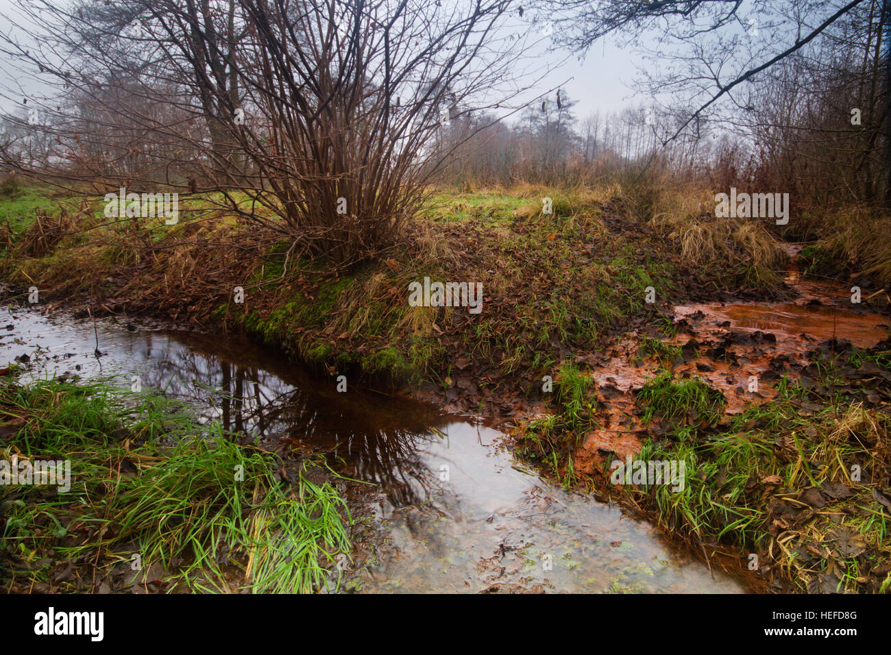 Seepage of iron rich groundwater into a small stream - Stock Image