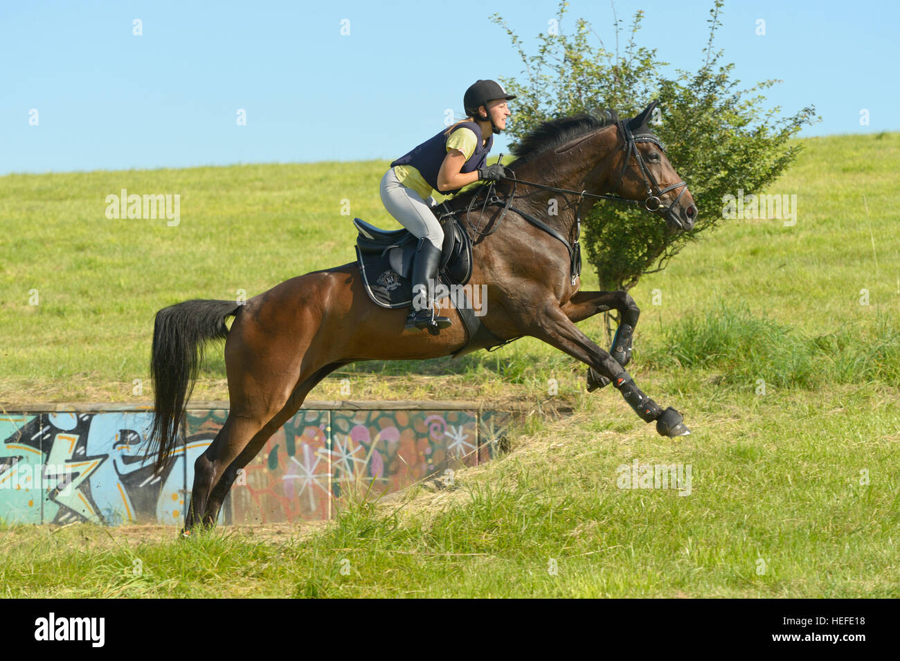 Rider on Hanoverian horse mare riding cross country - Stock Image