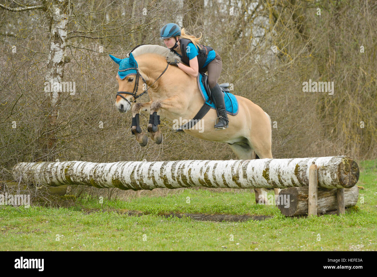 Horse Fjord jumping pictures catalog photo