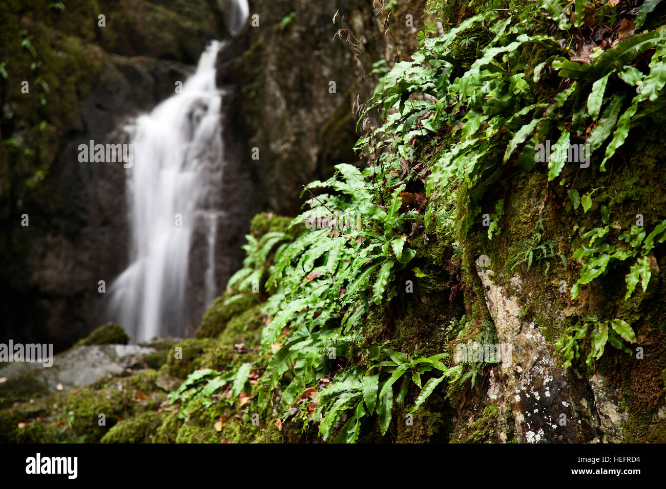 Catrigg Force Waterfall at Stainforth, near Settle, Yorkshire Dales - Stock Image