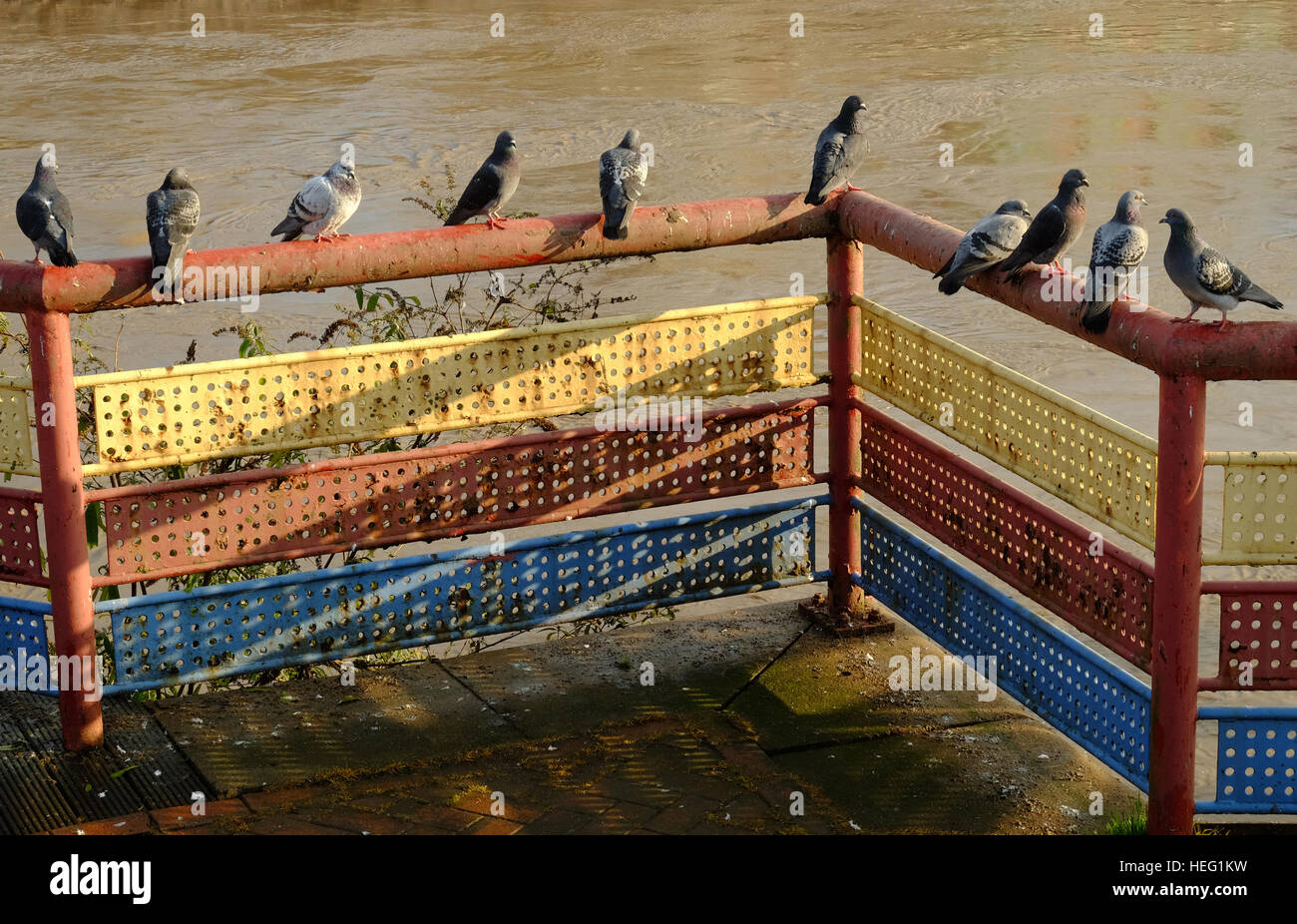 pigeons perched on a handrail - Stock Image