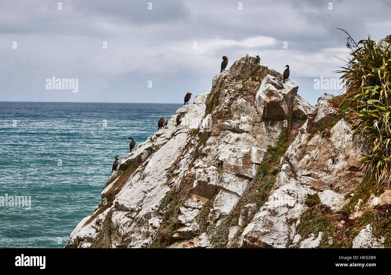 Neuseeland, Südinsel, einheimische Kormorane sitzen auf Felsen, am Meer, bewölkter Himmel - Stock Image