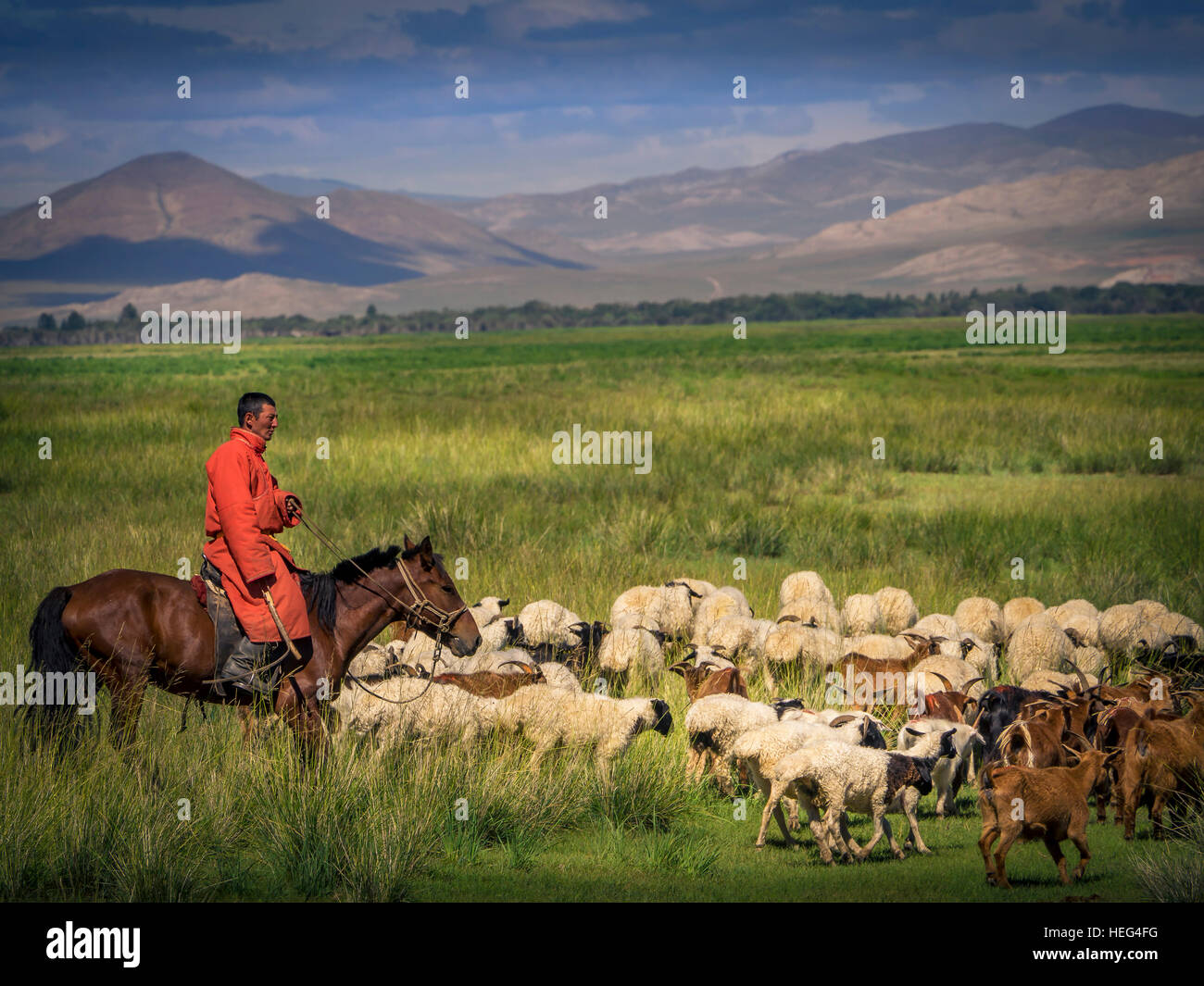 Nomad, rider on horseback with goats and sheep, Mongolia - Stock Image