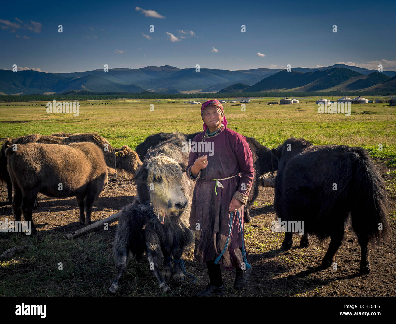 Nomad with yaks (Bos mutus), Mongolia - Stock Image