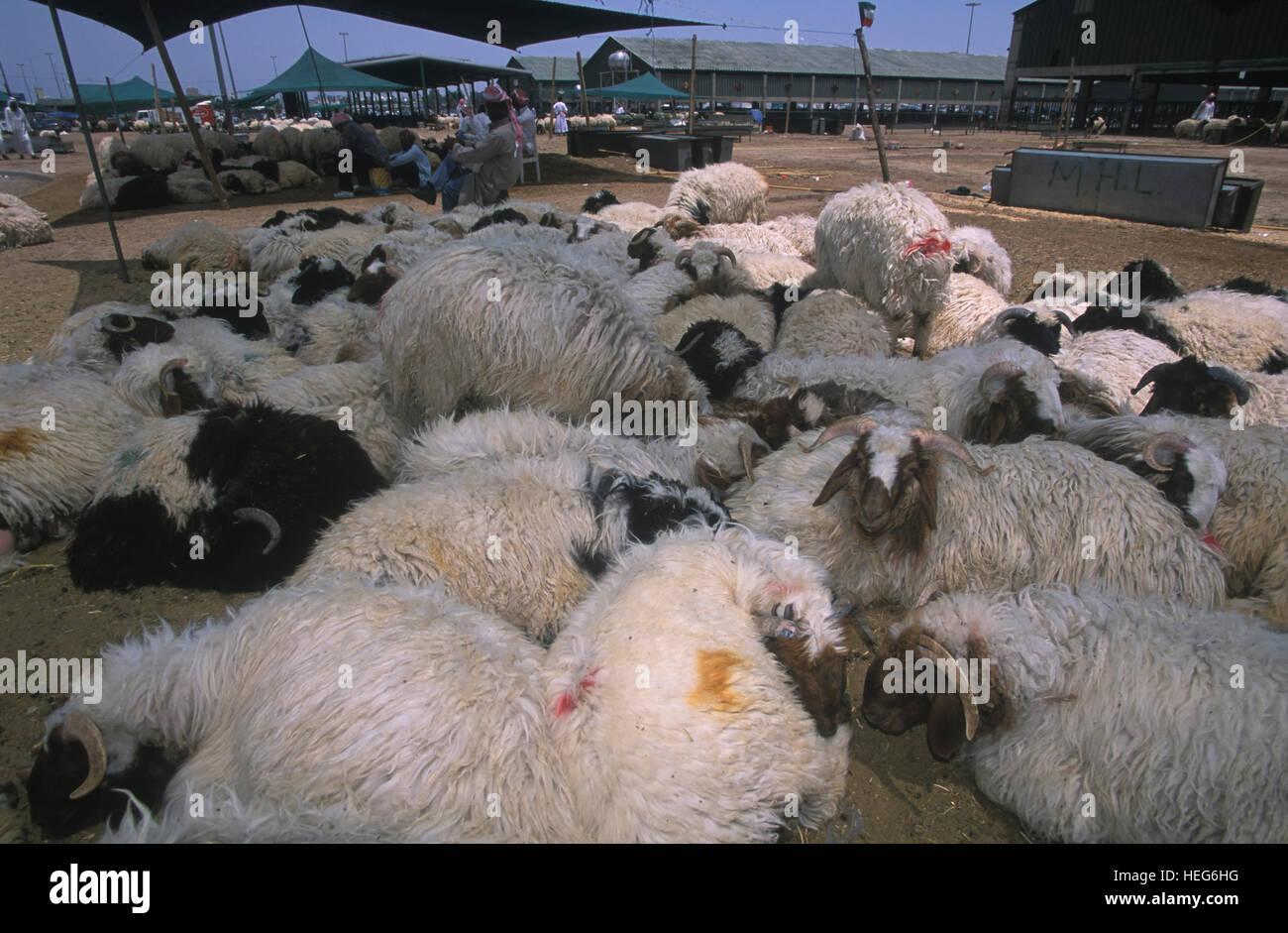 Kuwatian Stock Photos & Kuwatian Stock Images - Alamy