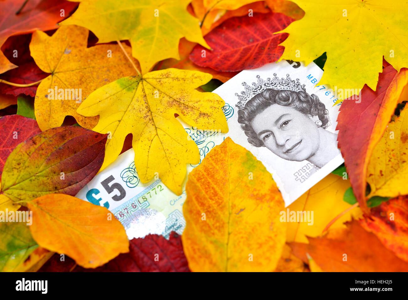 Britische Pfundnote unter Herbstlaub, Kursverfall vom Pfund - Stock Image