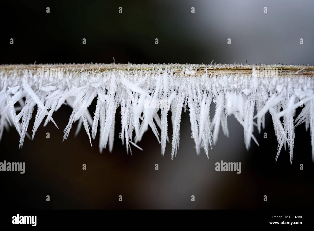 Raureif an einem Zweig - Stock Image