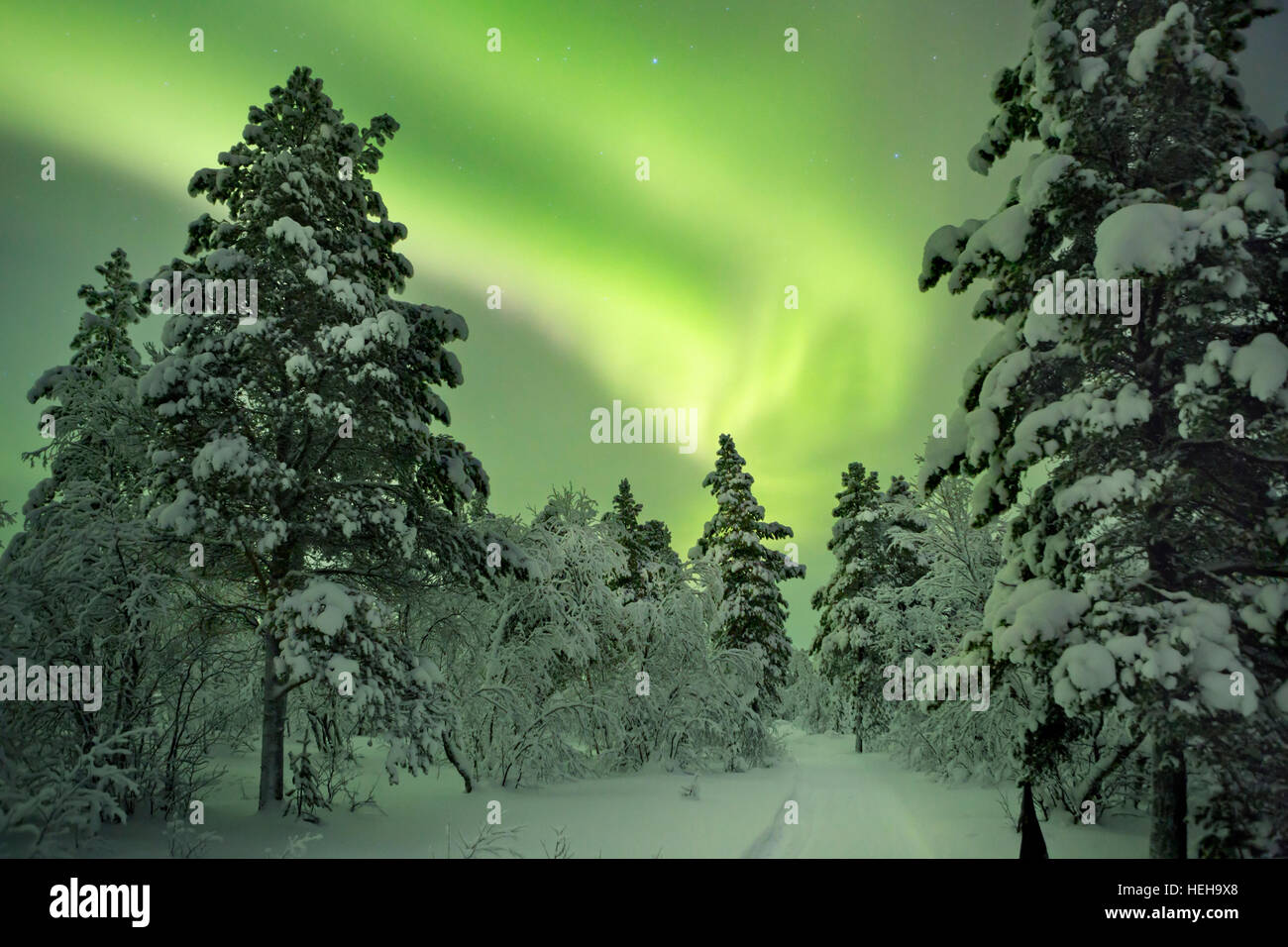 Spectacular aurora borealis (northern lights) over a path through winter landscape in Finnish Lapland. - Stock Image