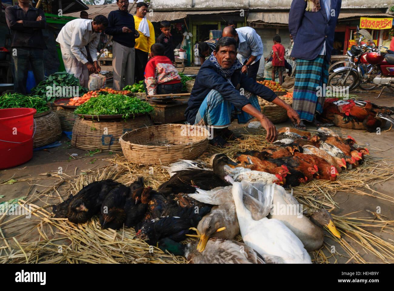 Barisal: Market, poultry, chickens, Barisal Division, Bangladesh - Stock Image
