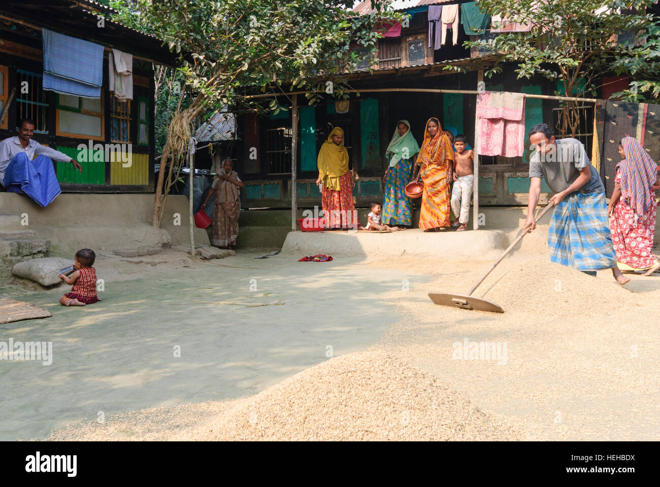 Madhabpasa: Village house; Man spreads rice to dry, Barisal Division, Bangladesh - Stock Image