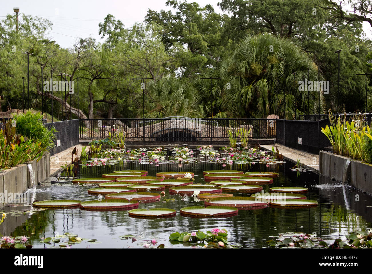 Waterlilies and huge pads at the International Waterlily Collection ...