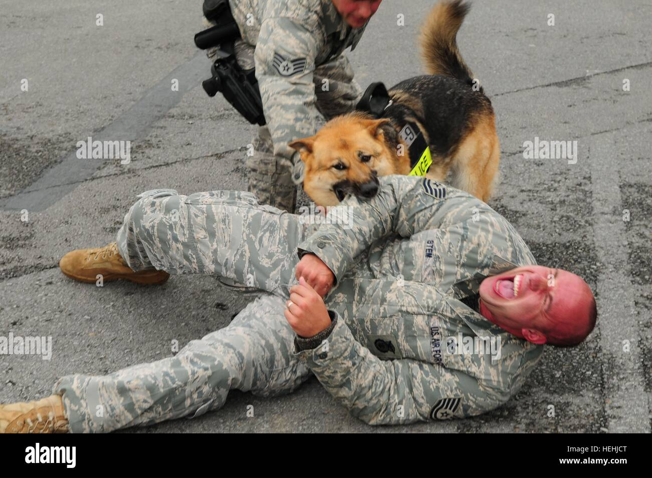 Military working dog Zena attacks a mock bank robber during a Local Operational Readiness Exercise simulation at - Stock Image