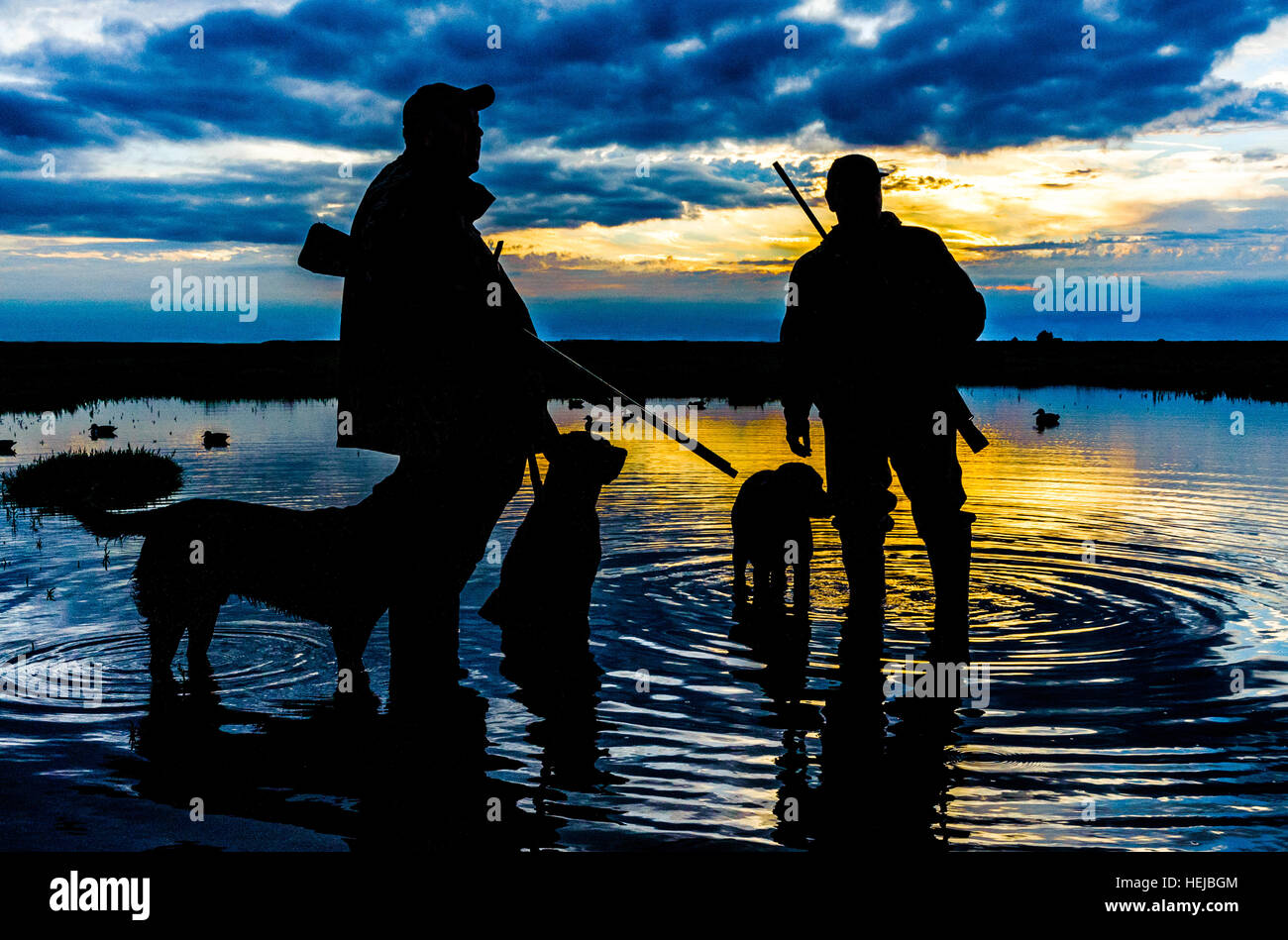 860f9c9a4f084 Silhouette of UK wildfowlers or duck shooters and dogs after a days  shooting on the marshes