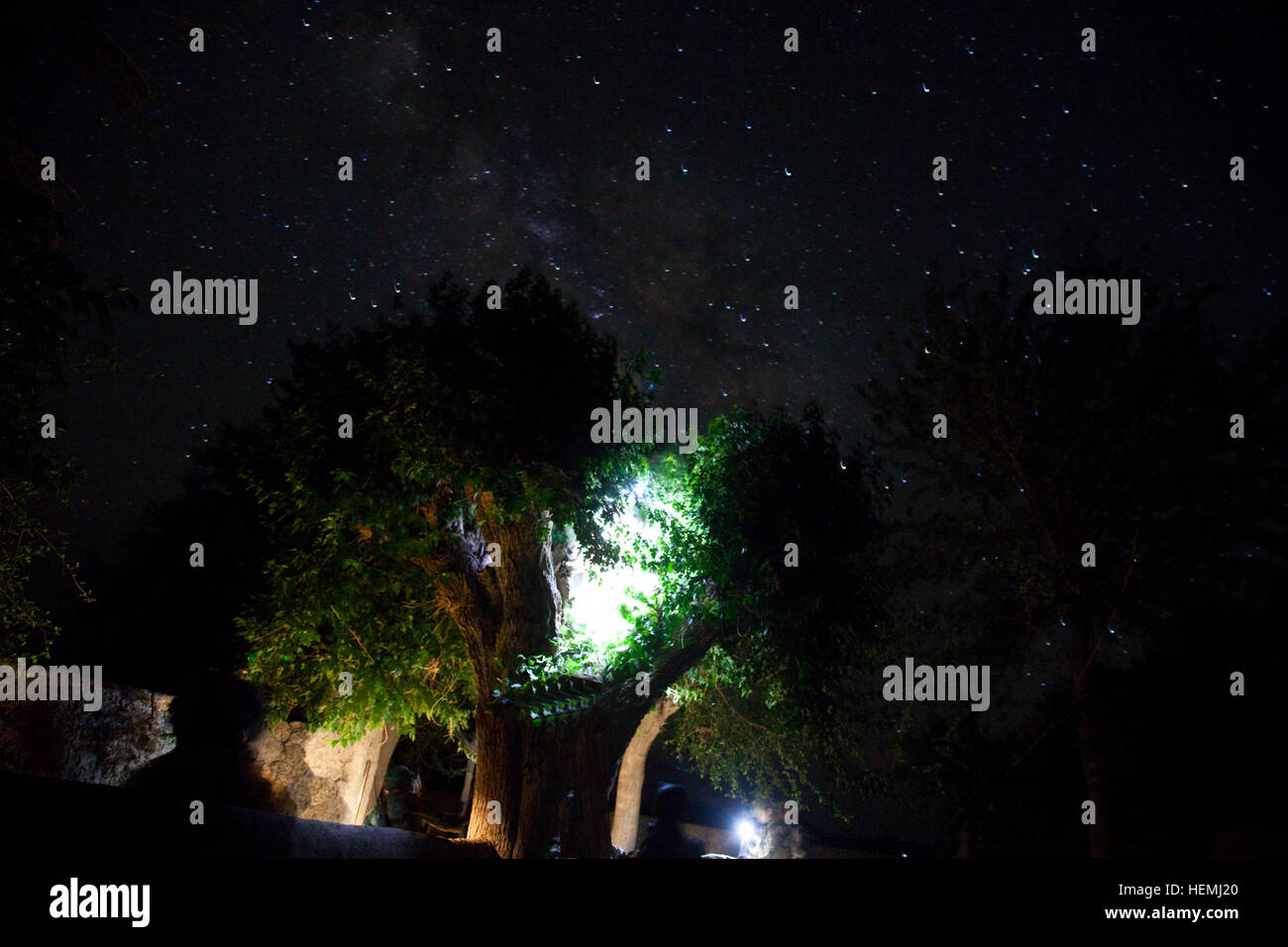 Members of an Afghan and coalition security force search for an enemy in a tree during a night operation in Nawah - Stock Image