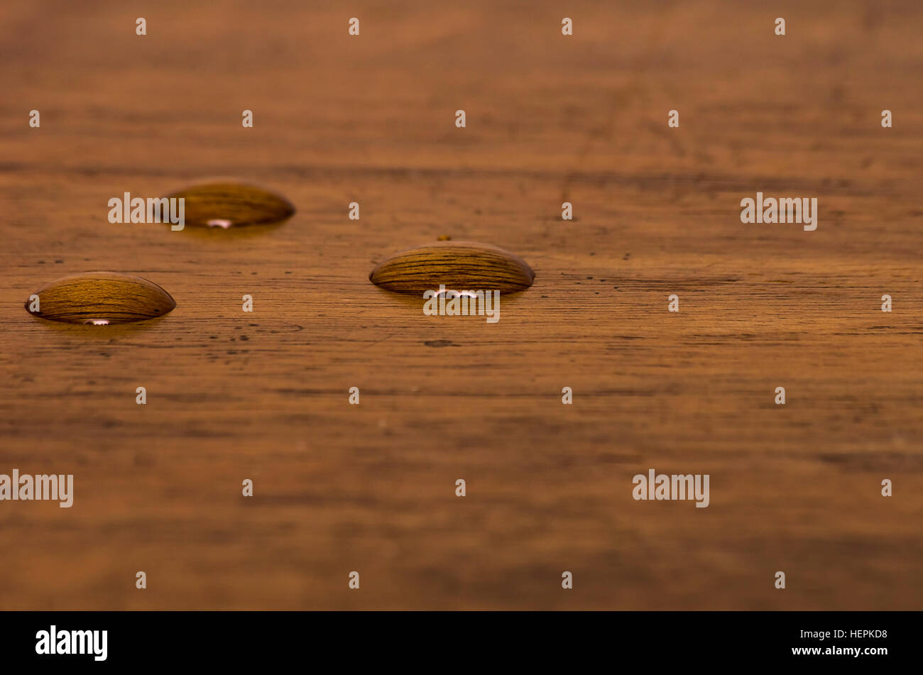Three water beads on finished walnut wood. - Stock Image