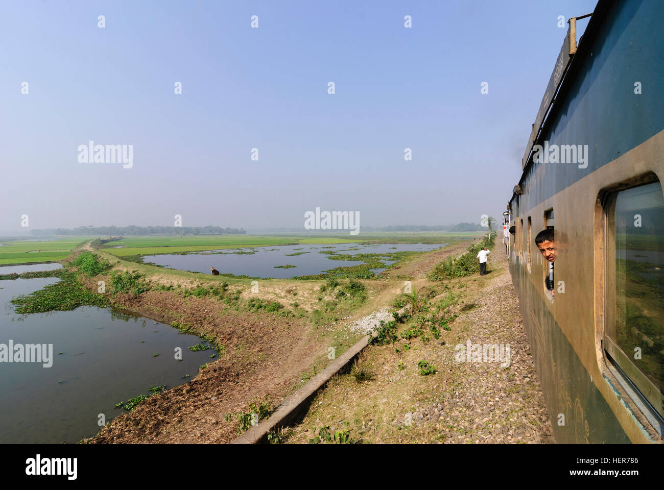 : Intercity train passes through rice fields, Chittagong Division, Bangladesh - Stock Image